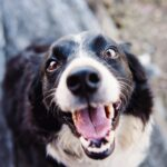 Dog Nutrition Experts Weigh In